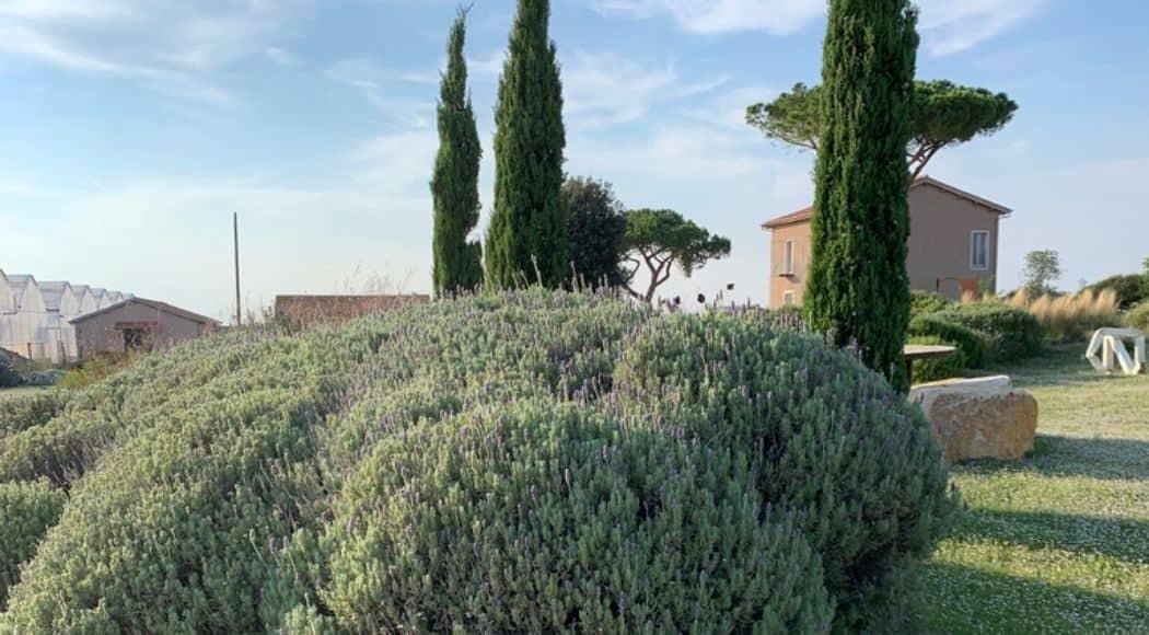 Vivaio progettazione piante mediterranee 98.3 di Tarquinia